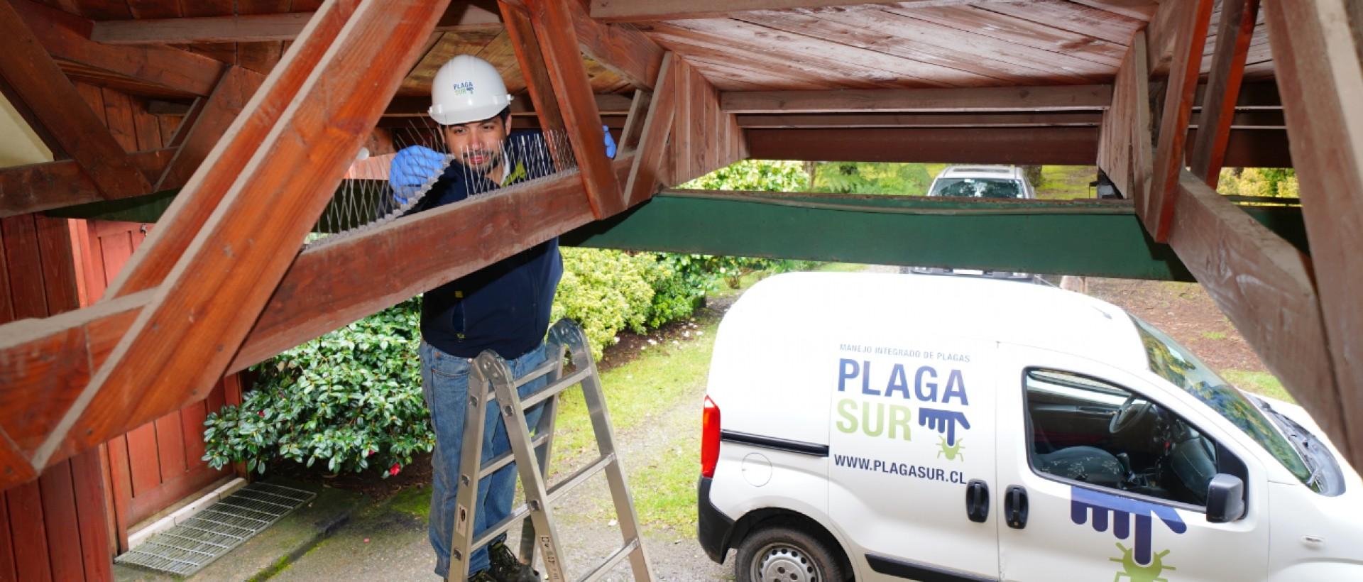 PLAGASUR®   Control de Plagas en Puerto Montt - Puerto Varas - Osorno - Castro   Control de palomas y murciélagos