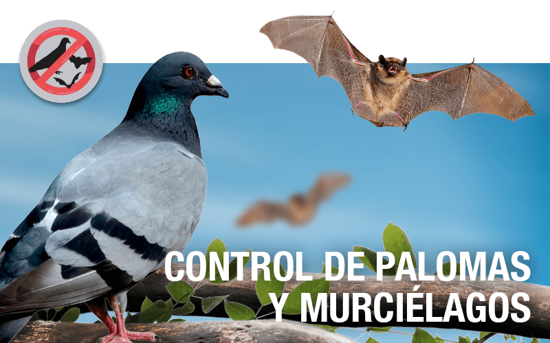 Control de palomas y murciélagos - PLAGASUR® | Control de Plagas en Puerto Montt - Puerto Varas - Osorno - Castro